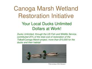 Canoga Marsh Wetland Restoration Initiative