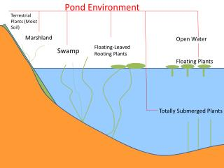 Pond Environment