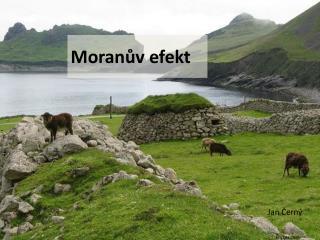 Moranův  efekt