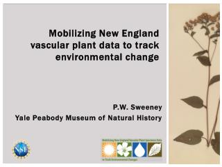 P.W. Sweeney Yale Peabody Museum of Natural History