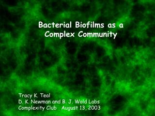 Bacterial Biofilms as a Complex Community