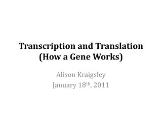 Transcription and Translation (How a Gene Works)