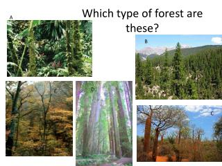Which type of forest are these?