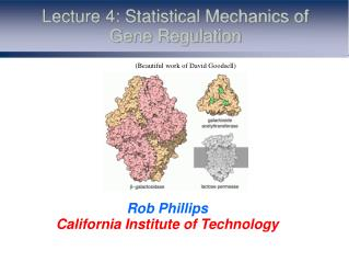 Lecture 4: Statistical Mechanics of Gene Regulation