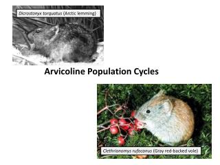 Arvicoline  Population Cycles