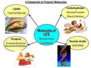 Lipids  Fats/Oils/Steroids