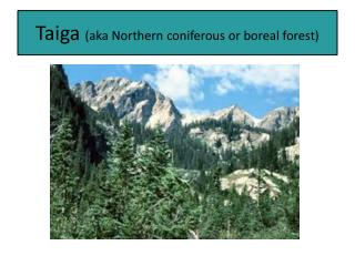 Taiga  (aka Northern coniferous or boreal forest)
