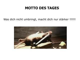 MOTTO DES TAGES