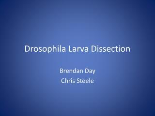 Drosophila Larva Dissection