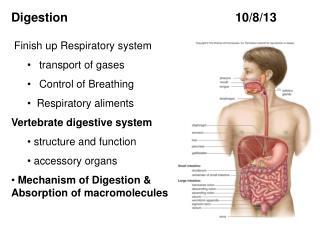 Digestion  10/8/ 13
