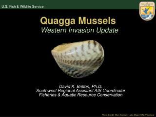 Quagga Mussels