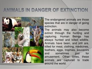 ANIMALS IN DANGER OF EXTINCTION