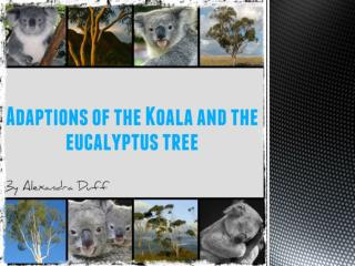 ADAPTIONS OF THE KOALA