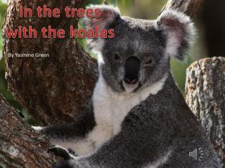 In the trees with the koalas