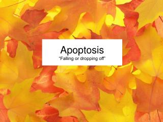 "Apoptosis ""Falling or dropping off"""