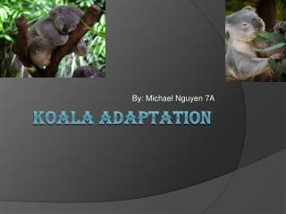 KOALA ADAPTATION