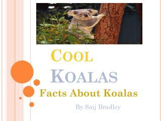Cool  Koalas