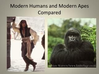 Modern Humans and Modern Apes Compared