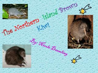 The Northern  Island  Brown  Kiwi