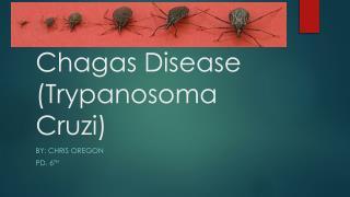 Chagas Disease ( Trypanosoma Cruzi )