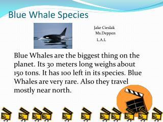 Blue Whale Species