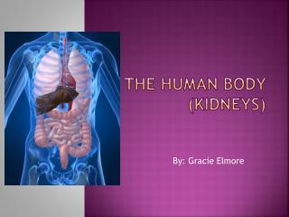 The Human Body  (Kidneys)