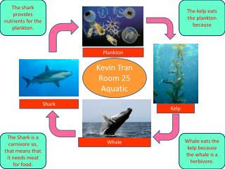 Kevin Tran Room 25 Aquatic