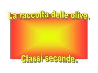 La raccolta delle olive. Classi seconde.