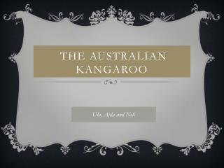 the Australian   kangaroo