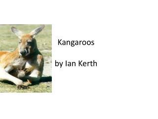 Kangaroos by Ian  K erth