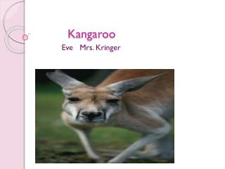 Kangaroo Kangaroo