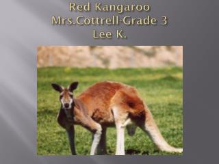 Red Kangaroo Mrs.Cottrell -Grade 3  Lee K.