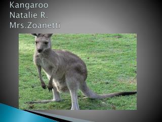 Kangaroo Natalie R. Mrs.Zoanetti