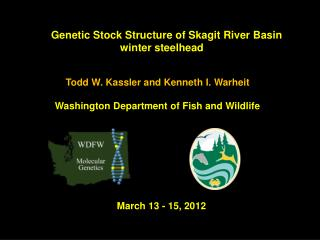 Genetic Stock Structure of  Skagit River Basin winter steelhead