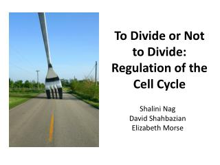 To Divide or Not  to  Divide:  Regulation  of the Cell Cycle