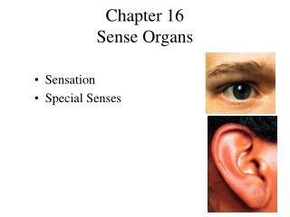 Chapter 16 Sense Organs
