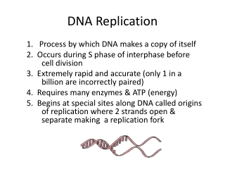 DNA- Replication