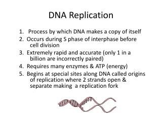 DNA- Replication