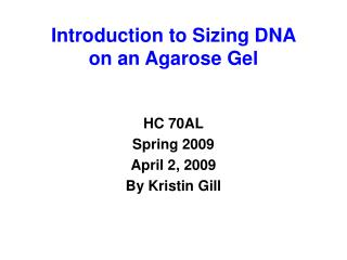 Introduction to Sizing DNA  on an Agarose Gel