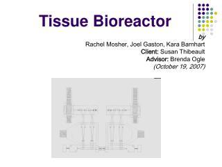 Tissue Bioreactor