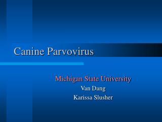 Canine Parvovirus