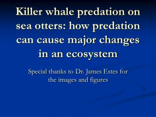 Killer whale predation on sea otters: how predation can cause major changes in an ecosystem