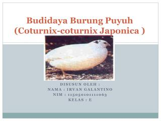 Budidaya Burung Puyuh (Coturnix-coturnix Japonica )