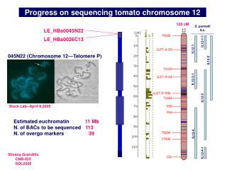 Progress on sequencing tomato chromosome 12