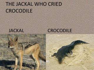 THE JACKAL WHO CRIED CROCODILE