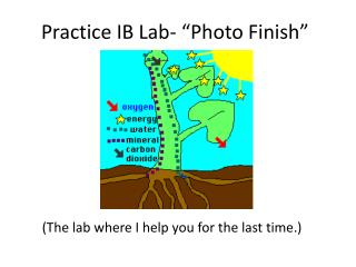 "Practice IB Lab- ""Photo Finish"""