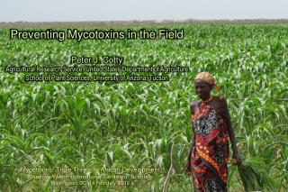Preventing Mycotoxins in the Field Peter J. Cotty
