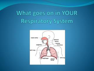 What goes on in YOUR Respiratory System