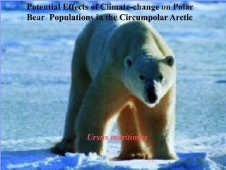 Potential Effects of Climate-change on Polar Bear 	Populations in the Circumpolar Arctic