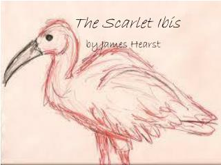 The Scarlet Ibis by James Hearst